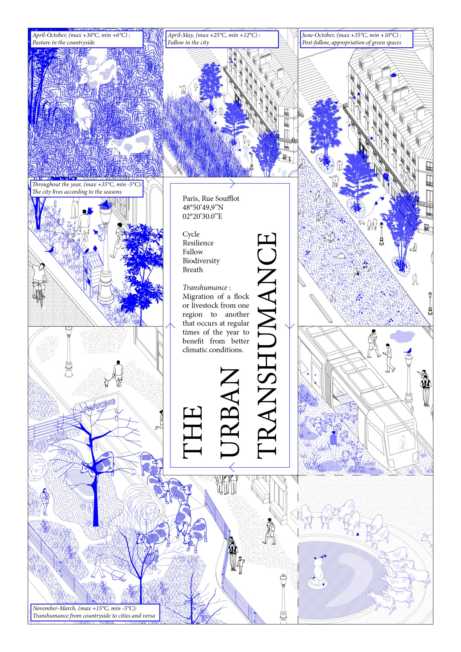 22261_The Urban Transhumance_Presentation
